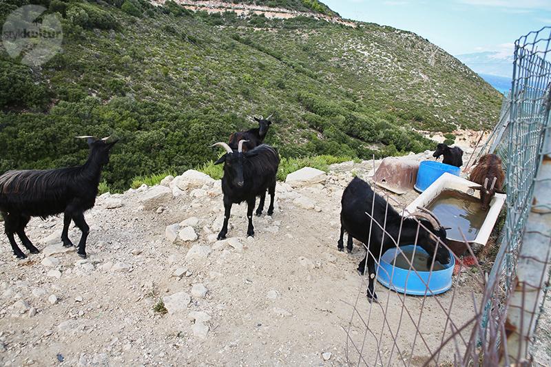 41 Co warto zobaczyć na Zakynthos? Największe atrakcje greckiej wyspy