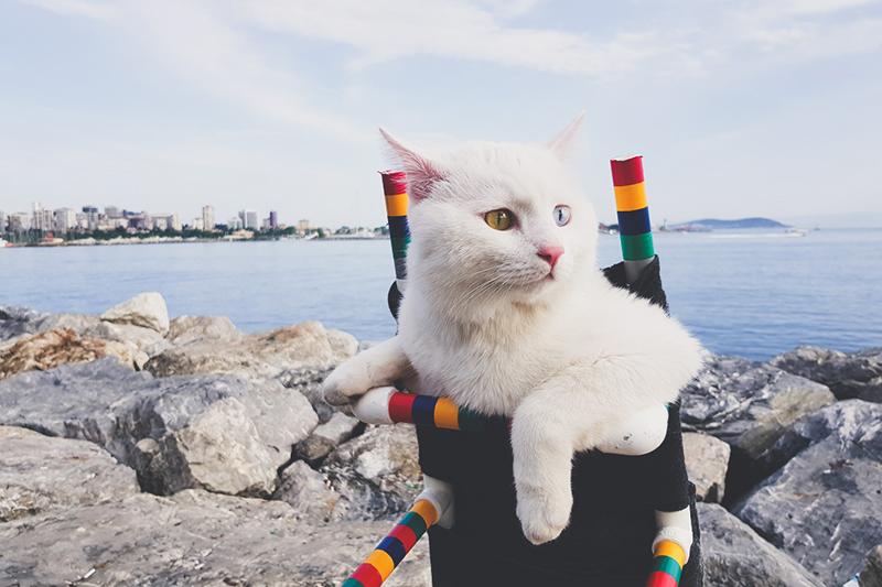 kot na wozku inwalidzkim edited Ciekawostki o Turcji