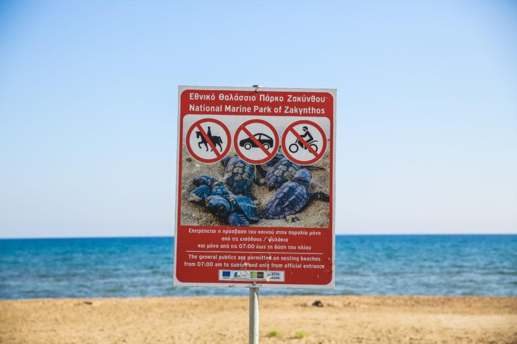 Zakynthos Karetta 1 1024x683 Żółwie Karetta na greckiej wyspie Zakynthos