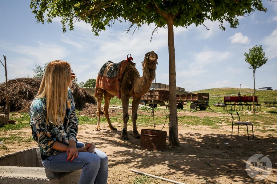 Piatek 9142 Starożytny Harran i niezwykłe domy ule [południowo wschodnia Turcja]