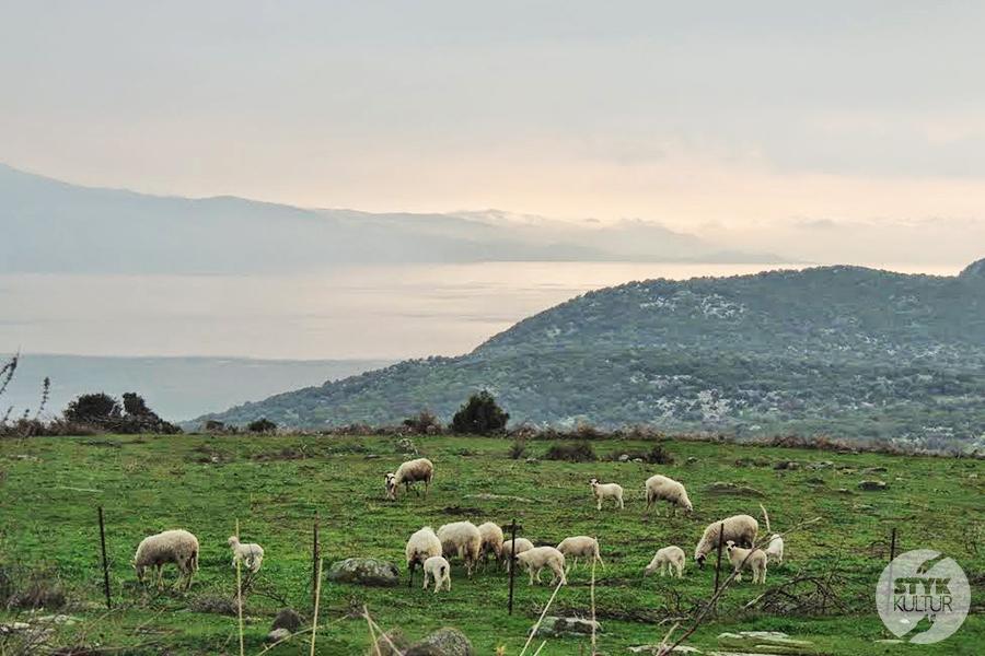 assos7 1 Starożytne Assos w Turcji, w pobliżu wsi Behramkale