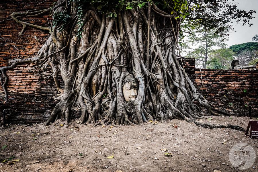 Ayutthaya 17 of 31 Ayutthaya   wycieczka do dawnej stolicy Tajlandii