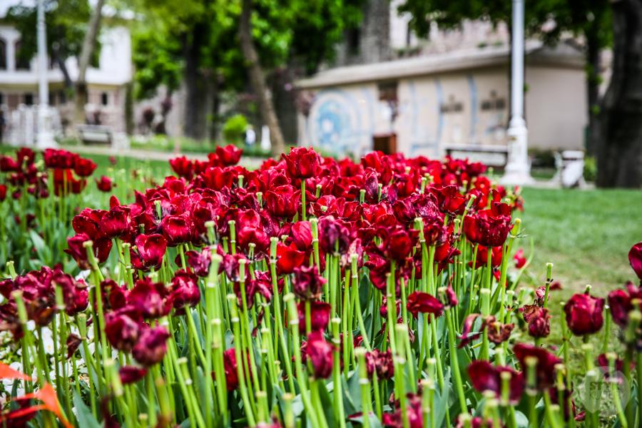 Gulhane 1 of 4 Co warto zobaczyć w Stambule? Największe atrakcje miasta