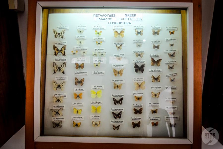 Rodos Grecja 229 Największe atrakcje Rodos: Petaloudes   Dolina Motyli
