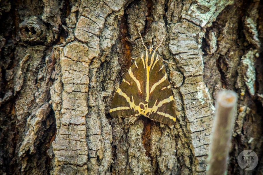 Rodos Grecja 231 Największe atrakcje Rodos: Petaloudes   Dolina Motyli