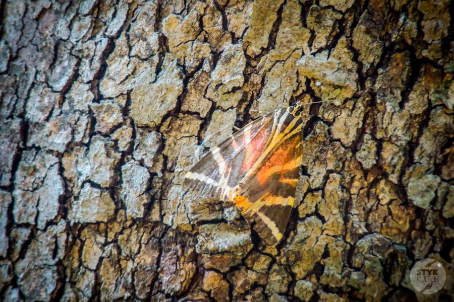 Rodos Grecja 232 Największe atrakcje Rodos: Petaloudes   Dolina Motyli