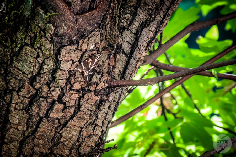 Rodos Grecja 233 Największe atrakcje Rodos: Petaloudes   Dolina Motyli