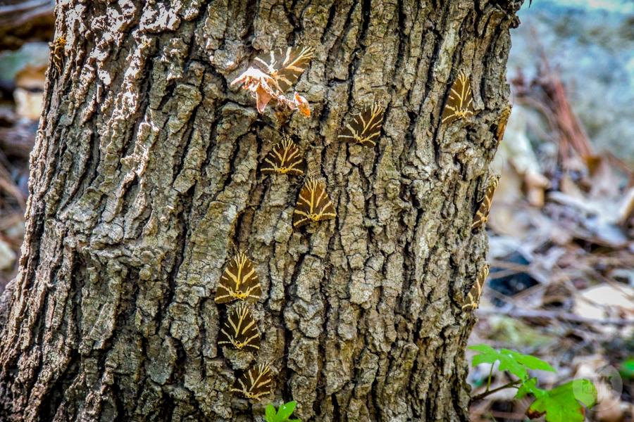 Rodos Grecja 235 Największe atrakcje Rodos: Petaloudes   Dolina Motyli