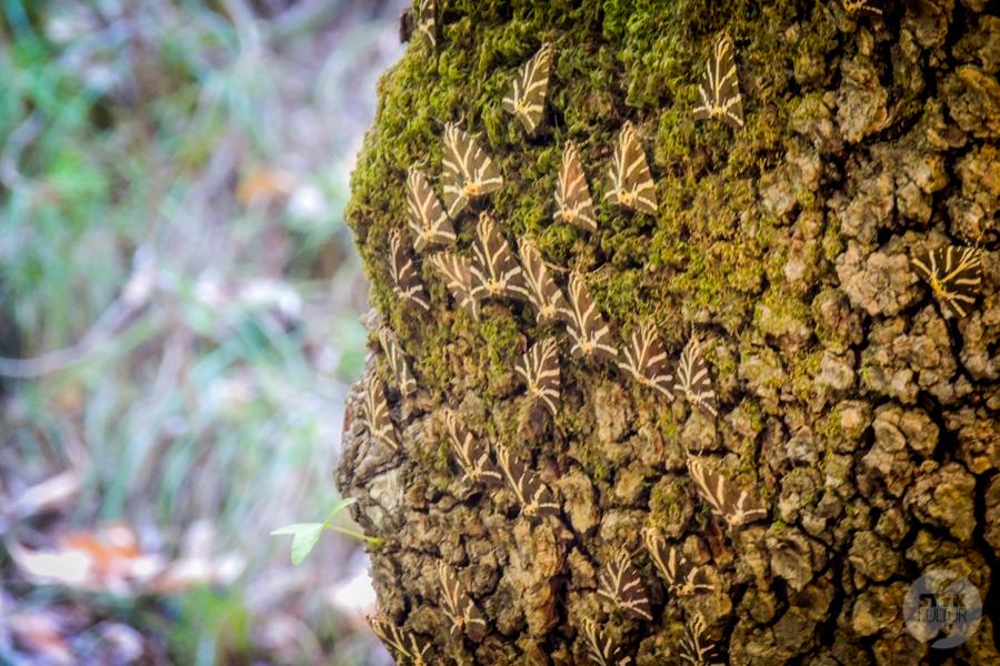 Rodos Grecja 237 Największe atrakcje Rodos: Petaloudes   Dolina Motyli