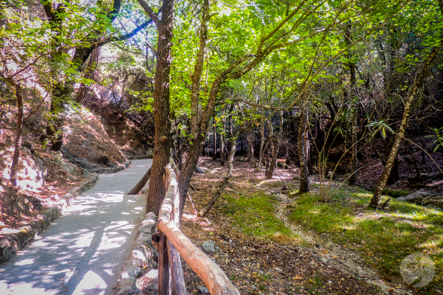 Rodos Grecja 238 Największe atrakcje Rodos: Petaloudes   Dolina Motyli