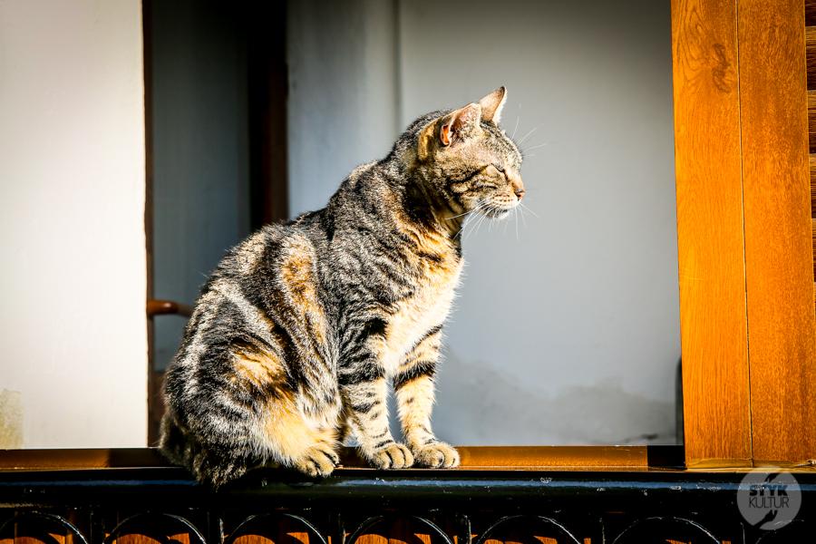 2 2 Dlaczego w Turcji jest tyle kotów?  O kotach w Stambule (i nie tylko)