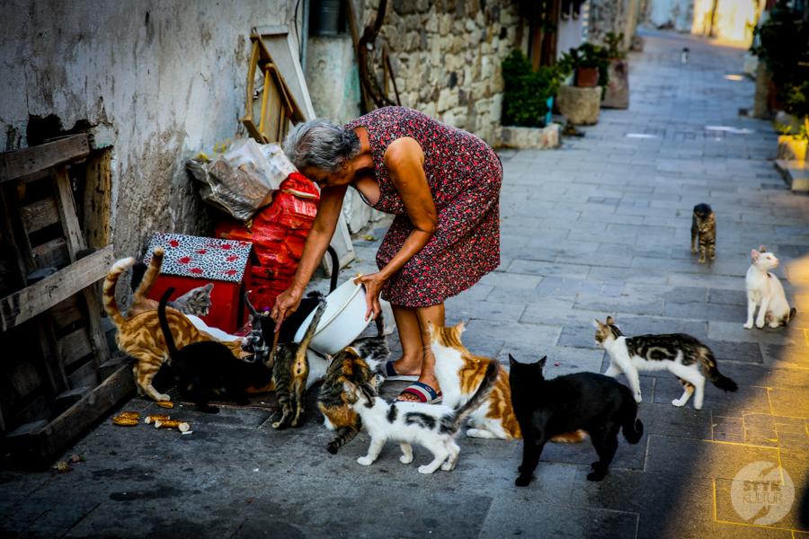 3 2 Dlaczego w Turcji jest tyle kotów?  O kotach w Stambule (i nie tylko)