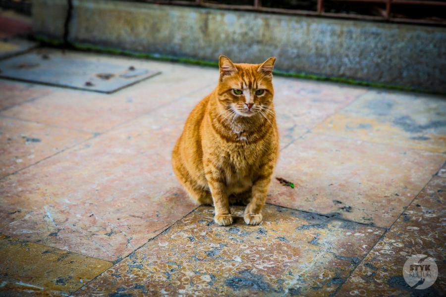 Koty Turcja 1 Dlaczego w Turcji jest tyle kotów?  O kotach w Stambule (i nie tylko)