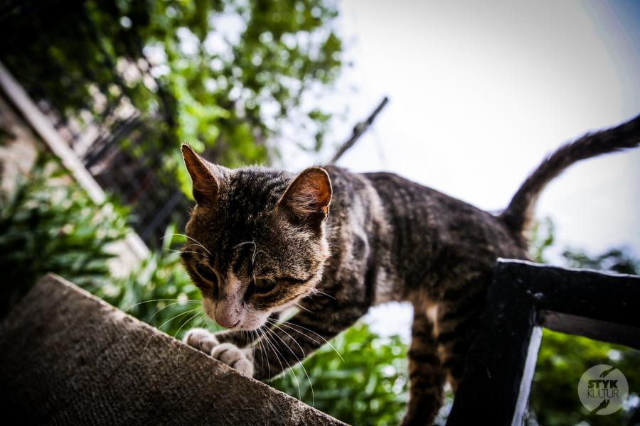 Koty Turcja 10 Dlaczego w Turcji jest tyle kotów?  O kotach w Stambule (i nie tylko)