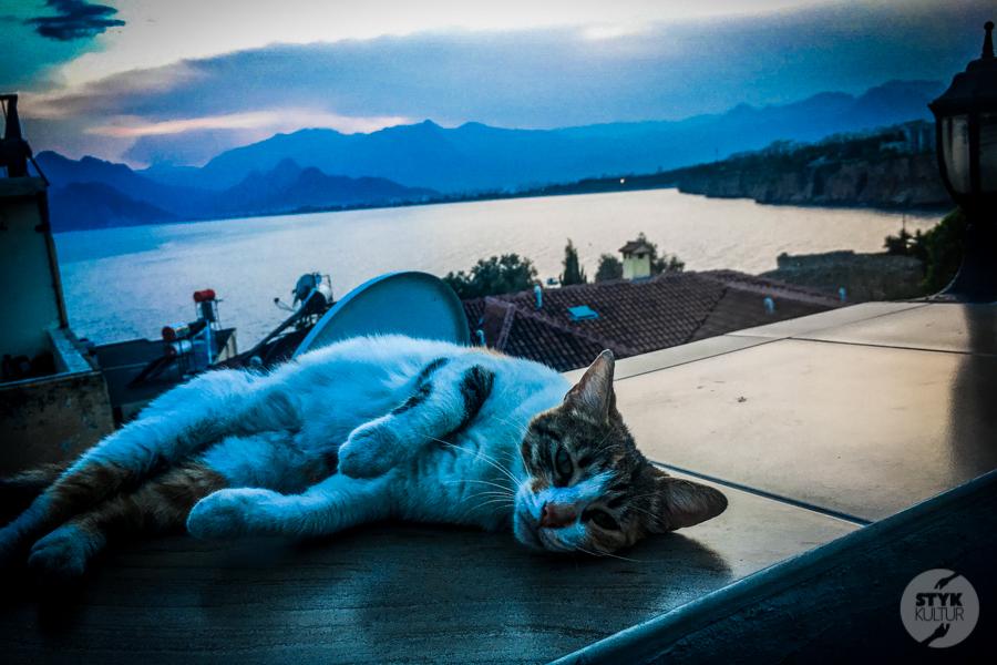 Koty Turcja 11 Dlaczego w Turcji jest tyle kotów?  O kotach w Stambule (i nie tylko)