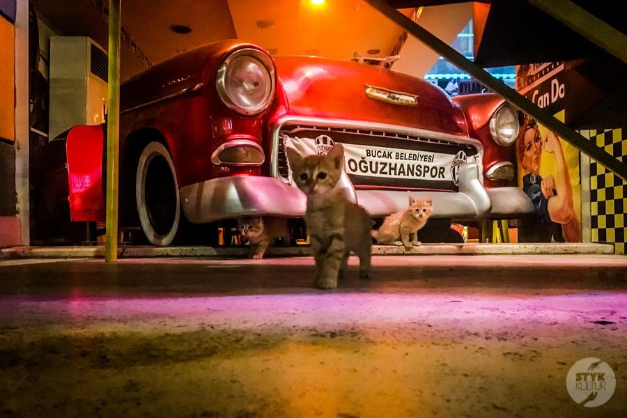 Koty Turcja 14 Dlaczego w Turcji jest tyle kotów?  O kotach w Stambule (i nie tylko)