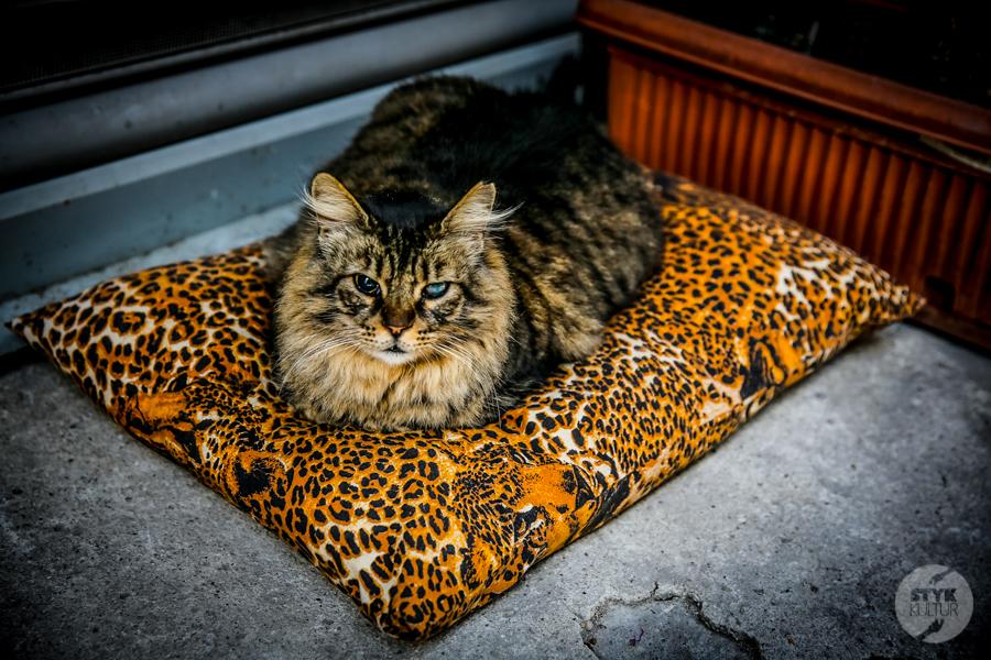 Koty Turcja 18 Dlaczego w Turcji jest tyle kotów?  O kotach w Stambule (i nie tylko)