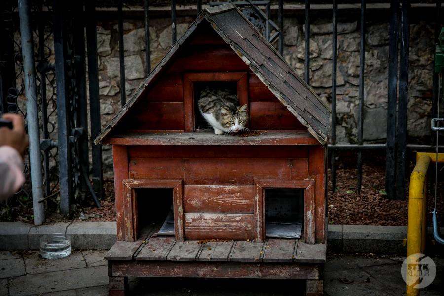 Koty Turcja 19 Dlaczego w Turcji jest tyle kotów?  O kotach w Stambule (i nie tylko)