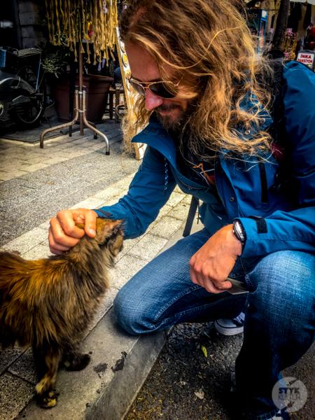 Koty Turcja 2 Dlaczego w Turcji jest tyle kotów?  O kotach w Stambule (i nie tylko)