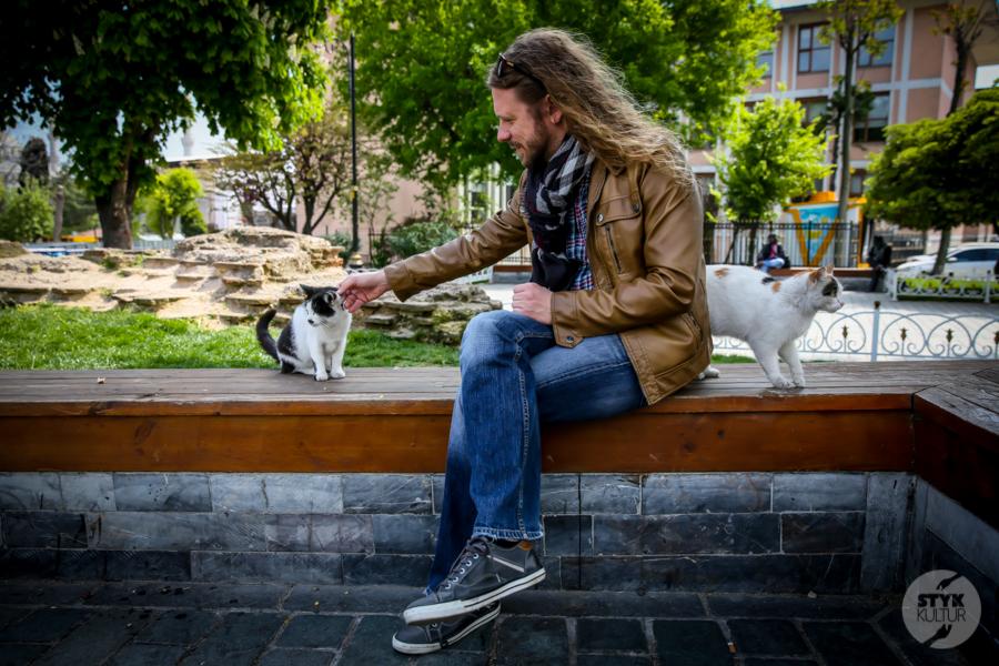 Koty Turcja 20 Dlaczego w Turcji jest tyle kotów?  O kotach w Stambule (i nie tylko)