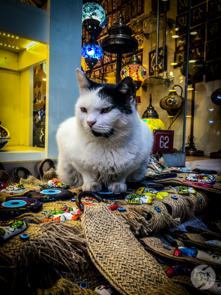 Koty Turcja 4 Dlaczego w Turcji jest tyle kotów?  O kotach w Stambule (i nie tylko)