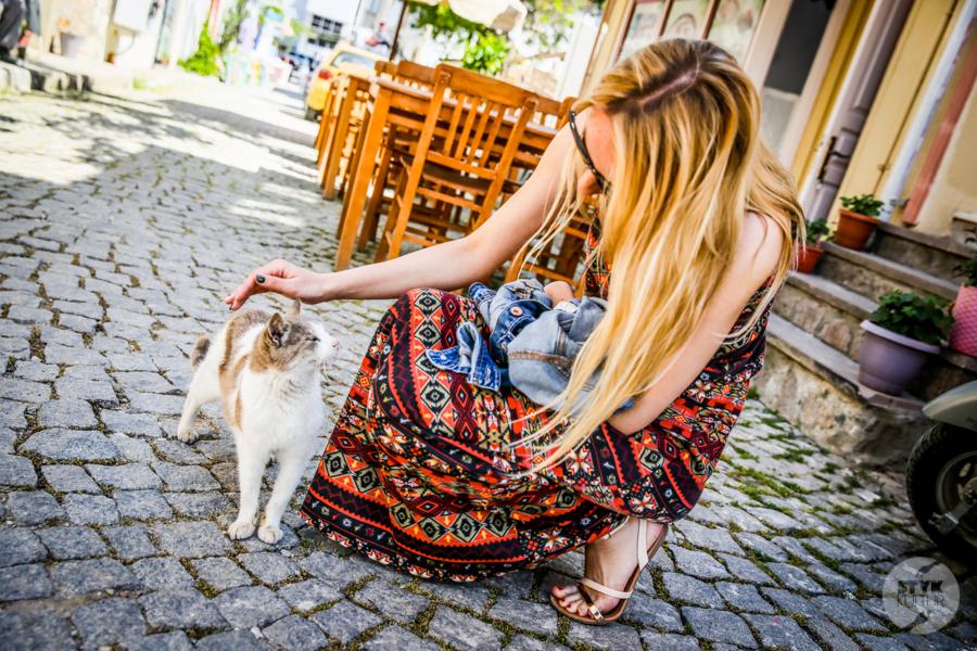 Koty Turcja 5 Dlaczego w Turcji jest tyle kotów?  O kotach w Stambule (i nie tylko)