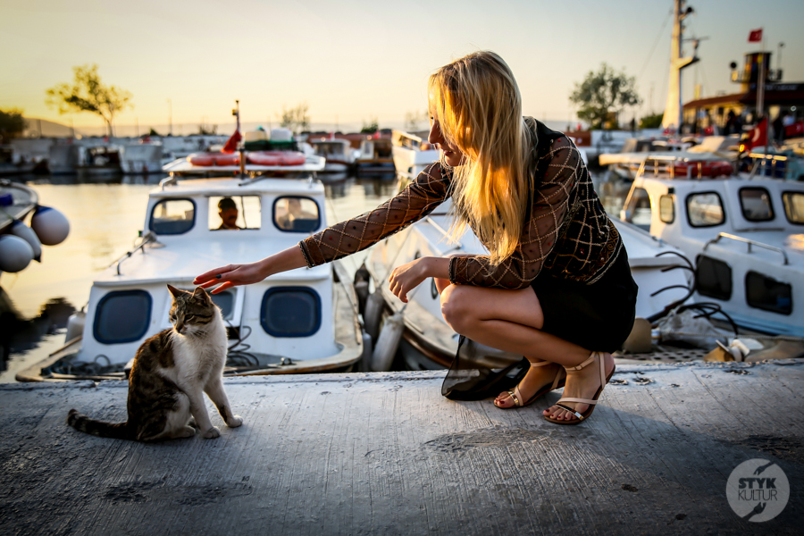 Koty Turcja 6 Dlaczego w Turcji jest tyle kotów?  O kotach w Stambule (i nie tylko)