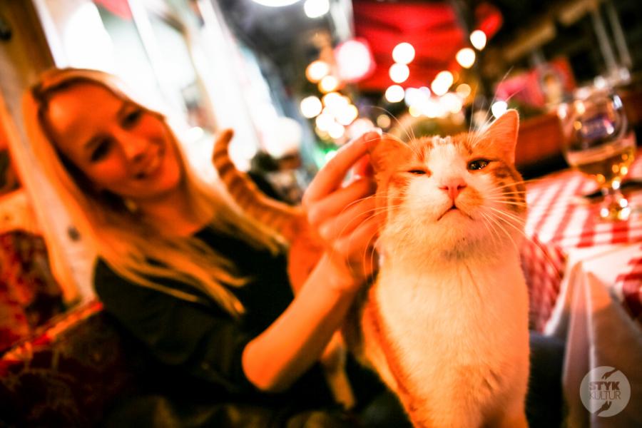 Koty Turcja 7 Dlaczego w Turcji jest tyle kotów?  O kotach w Stambule (i nie tylko)