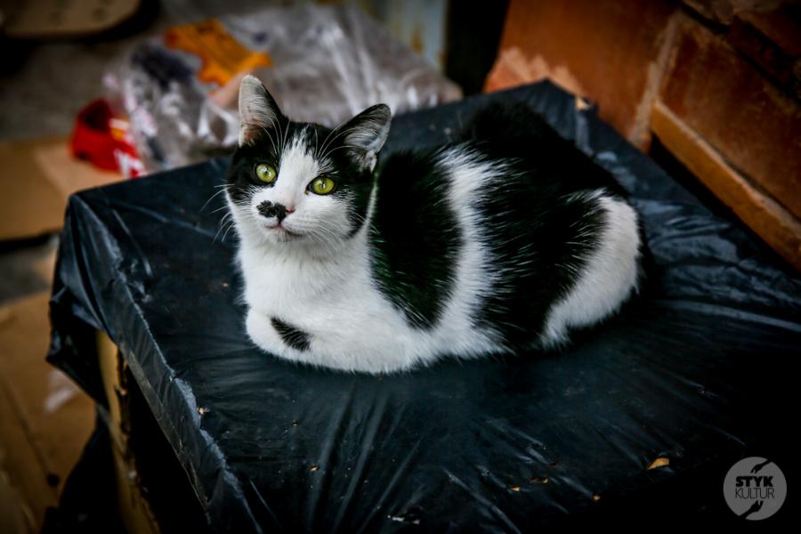 koty Stambul4 2 Dlaczego w Turcji jest tyle kotów?  O kotach w Stambule (i nie tylko)