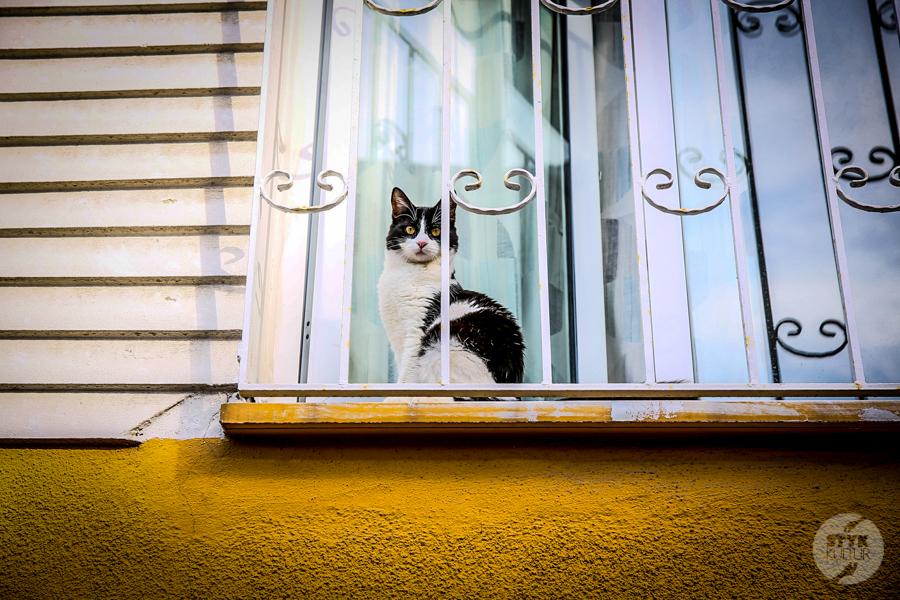koty Stambul45 2 Dlaczego w Turcji jest tyle kotów?  O kotach w Stambule (i nie tylko)