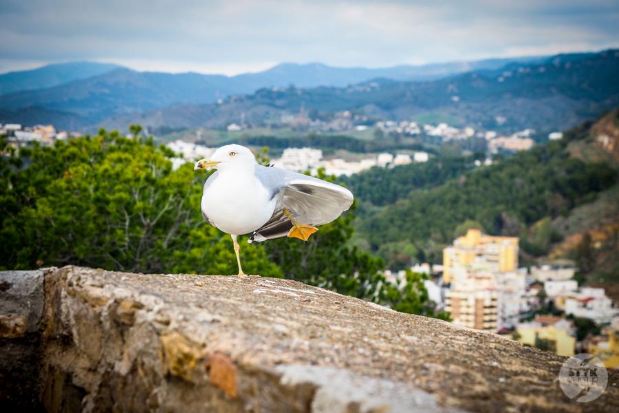 Malaga Hiszpania 38 Co warto zobaczyć w Maladze? 9 największych atrakcji hiszpańskiego miasta