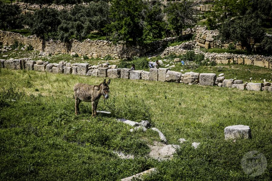 Dara Turcja 12 Niezwykłe odkrycia archeologów w tureckiej Darze, zaledwie 10 km od granicy z Syrią