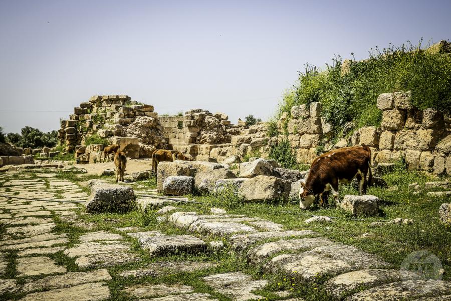 Dara Turcja 14 Niezwykłe odkrycia archeologów w tureckiej Darze, zaledwie 10 km od granicy z Syrią