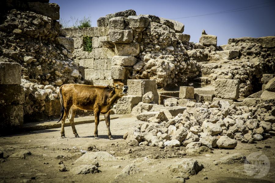 Dara Turcja 16 Niezwykłe odkrycia archeologów w tureckiej Darze, zaledwie 10 km od granicy z Syrią