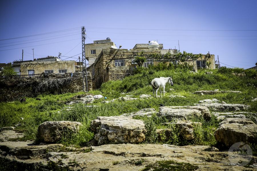 Dara Turcja 4 Niezwykłe odkrycia archeologów w tureckiej Darze, zaledwie 10 km od granicy z Syrią