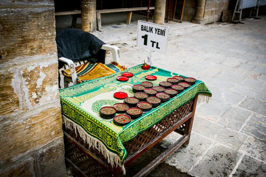 Sanliurfa pokarm dla rybek 5 of 1 Şanliurfa   miejsce narodzin proroka Ibrahima oraz cel pielgrzymek muzułmanów (Turcja Wschodnia)